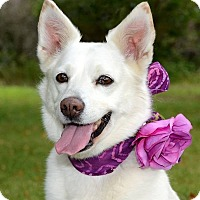 Adopt A Pet :: Nilla Bean - Davison, MI