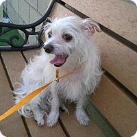 Adopt A Pet :: Jessie - Campbell, CA