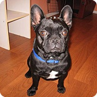 Adopt A Pet :: Pop Rocks - Eastpointe, MI