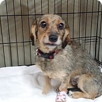 Adopt A Pet :: Meila - Lubbock, TX