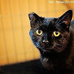 Photo 1 - Domestic Shorthair Cat for adoption in Whitewater, Wisconsin - Ebony