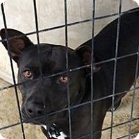 Adopt A Pet :: Rocky - Lewisburg, TN