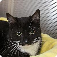 Adopt A Pet :: Kristen - Sarasota, FL