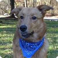 Adopt A Pet :: Parker - Mocksville, NC