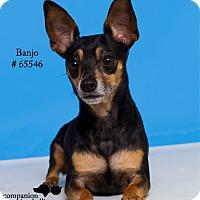 Adopt A Pet :: Banjo - Baton Rouge, LA