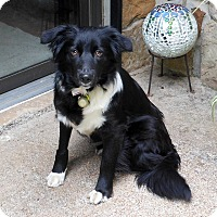 Adopt A Pet :: Alice - Washington, DC