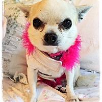 Adopt A Pet :: Kylee - Denver, CO