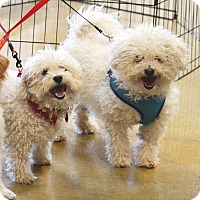 Adopt A Pet :: Fred & George - Rockford, IL