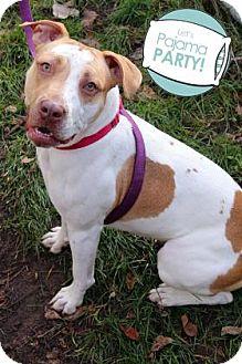 Pit Bull Terrier Mix Dog for adoption in Ann Arbor, Michigan - Elsie