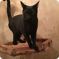 Adopt A Pet :: Inky - Bedford Hills, NY