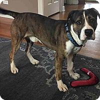 Adopt A Pet :: Louie - Aurora, IL