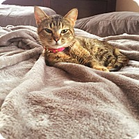 Adopt A Pet :: Arya - Overland Park, KS