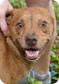 Terrier (Unknown Type, Small) Mix Dog for adoption in Gainesville, Florida - Andy