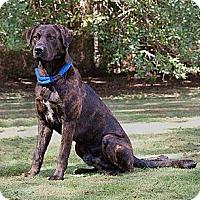 Adopt A Pet :: Boudreaux - New Orleans, LA