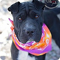 Adopt A Pet :: Beauty - Scottsdale, AZ