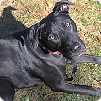 Adopt A Pet :: Oz - Wakefield, RI