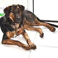 Adopt A Pet :: COME MEET Kylie - Westport, CT