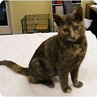 Adopt A Pet :: Paisley - Modesto, CA