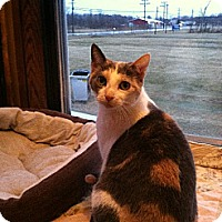 Adopt A Pet :: Tally - Jefferson, OH