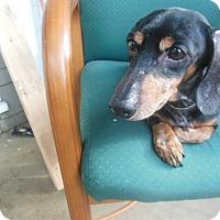 Adopt A Pet :: Hunley - Cincinnati, OH