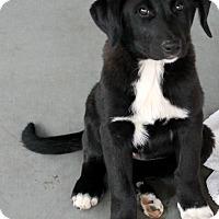 Adopt A Pet :: Olive - Woodland, CA
