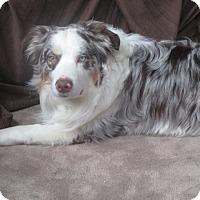 Adopt A Pet :: Crosby - Elk River, MN