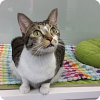 Adopt A Pet :: Clementine - Fort Lauderdale, FL