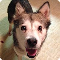 Adopt A Pet :: Demi - Greenville, SC