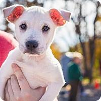 Adopt A Pet :: Sprite - Austin, TX