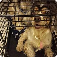 Adopt A Pet :: Ella and Faith - Livonia, MI
