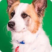 Adopt A Pet :: Rodeo - Berkeley Heights, NJ