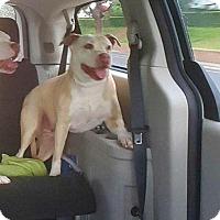 Adopt A Pet :: Mercedes - Lacey, WA