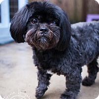 Adopt A Pet :: Albus - Eugene, OR