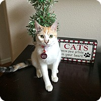 Adopt A Pet :: Moonflower - Whittier, CA