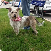 Terrier (Unknown Type, Medium) Mix Dog for adoption in Nicholasville, Kentucky - Shaggy