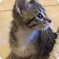 Adopt A Pet :: Mopsy - Duluth, GA