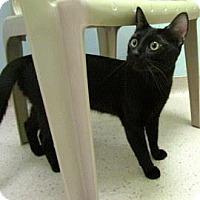 Adopt A Pet :: Arrow - Janesville, WI