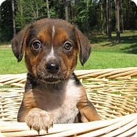 Adopt A Pet :: Beulah - Groton, MA