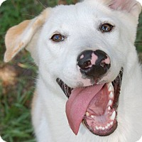 Adopt A Pet :: Diamond - Ormond Beach, FL