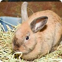 Adopt A Pet :: Coco - Oceanside, CA