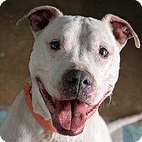 Adopt A Pet :: Moonbeam - Grayslake, IL