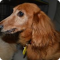 Adopt A Pet :: Mose - Prole, IA