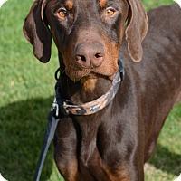 Adopt A Pet :: Anax - Ogden, UT