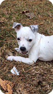 American Bulldog Mix Dog for adoption in Mobile, Alabama - Casper