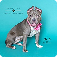Adopt A Pet :: Masie - Houston, TX