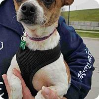 Adopt A Pet :: Daisy - Lisbon, IA