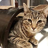 Adopt A Pet :: Washington - Smithfield, NC