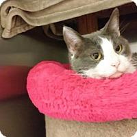 Adopt A Pet :: Miss Marple - Richmond, VA