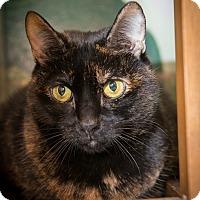 Adopt A Pet :: Tia - New York, NY