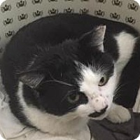 Adopt A Pet :: Finley - Worcester, MA